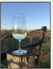 Wine Glass on a Vineyard Post