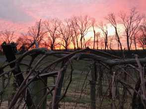 Winter Sunset at Locksley Estate