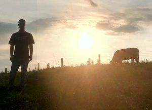 Sunset with the Cows