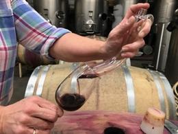 Tasting Wine from Barrel