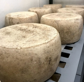Manchego-style Cheese is Ready!