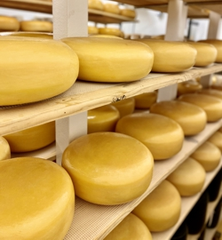 Nottingham Gouda Aging to Perfection