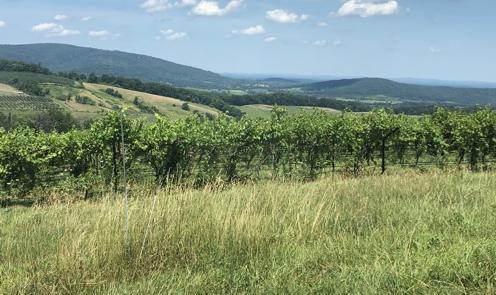 Bull Run Mountain Vineyards